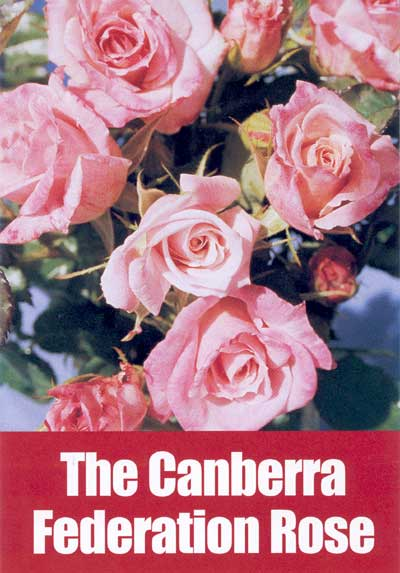 Canberra Federation Rose