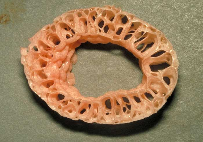 photo: Aseroe rubra - cross-section of stem