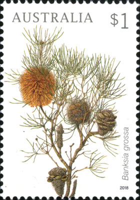 Banksia grossa stamp painted by Celia Rosser